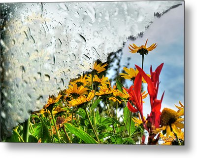 Rain Rain Go Away... Metal Print