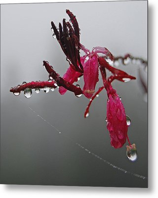 Metal Print featuring the photograph Rain Weaver by Jani Freimann