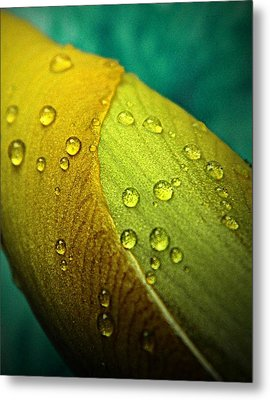 Rain Wrapped Metal Print by Chris Berry
