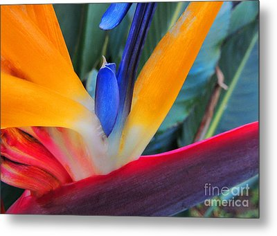 Rainbow Bright Metal Print by Kristine Merc
