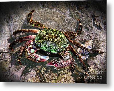 Rainbow Crab Metal Print by Mariola Bitner