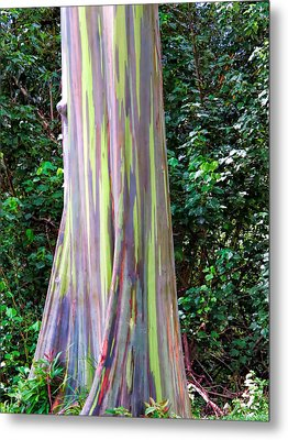 Rainbow Eucalyptus 3 Metal Print by Dawn Eshelman