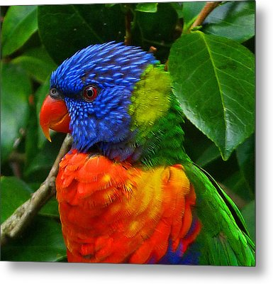 Rainbow Lorikeet Deep In Thought Metal Print