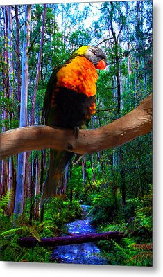 Rainbow Of The Forest Metal Print