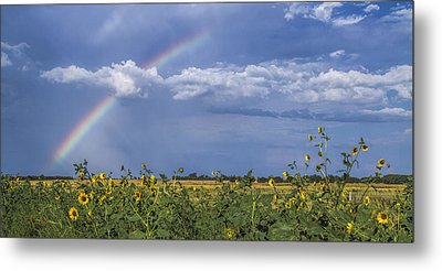 Rainbow Over Sunflowers Metal Print by Rob Graham