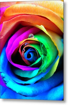 Rainbow Rose Metal Print by Juergen Weiss