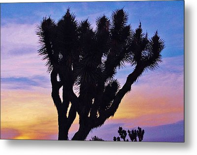 Metal Print featuring the photograph Rainbow Yucca by Angela J Wright