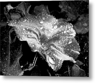 Raindrop Covered Leaf Metal Print