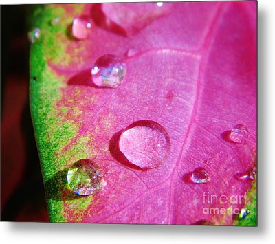 Raindrop On The Leaf Metal Print by D Hackett