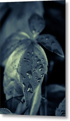 Raindrops Metal Print by Andreas Levi