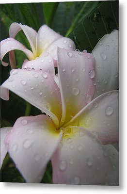 Metal Print featuring the photograph Raindrops by Beth Vincent