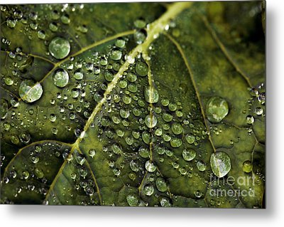 Metal Print featuring the photograph Raindrops by Dennis Bucklin
