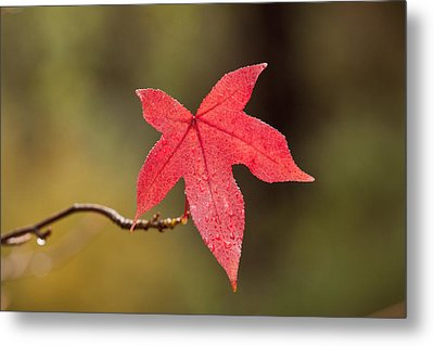 Raindrops On Red Fall Leaf Metal Print by Michelle Wrighton
