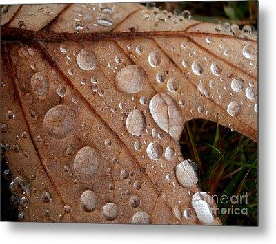 Raindrops  Metal Print by Steven Valkenberg
