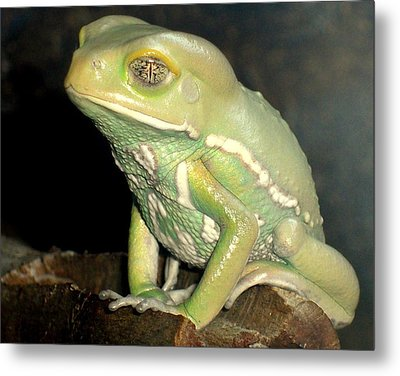 Rainforest Frog Metal Print by Heidi Manly