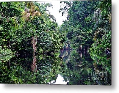 Rainforest Magic Metal Print