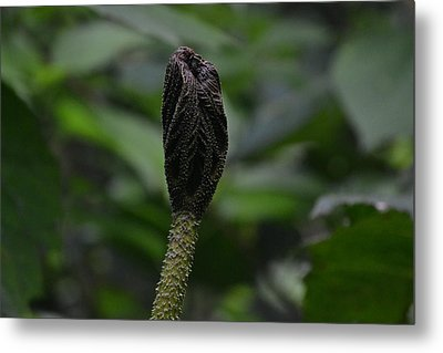 Rainforest Pod Metal Print by Bill Mock
