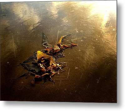 Rainkelp Metal Print by Randal Bruck