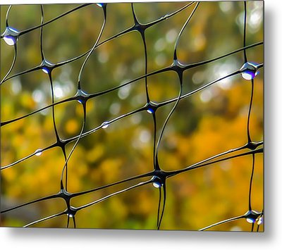 Rainy Autumn Morning Metal Print by Robert Mitchell