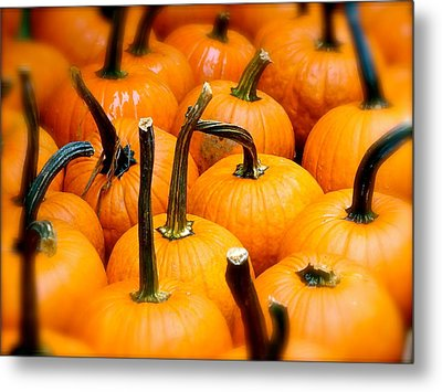 Metal Print featuring the photograph Rainy Day Pumpkins by Ira Shander