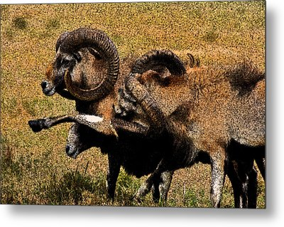 Metal Print featuring the photograph Rams At Half-time by Doc Braham