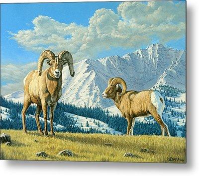 Rams On The Ridge  Metal Print by Paul Krapf