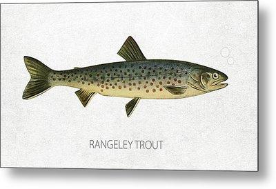 Rangeley Trout Metal Print by Aged Pixel