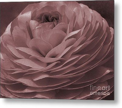 Metal Print featuring the photograph Ranunculus Red by Jean OKeeffe Macro Abundance Art