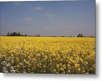 Metal Print featuring the photograph Rapeseed Field. by Paul Scoullar