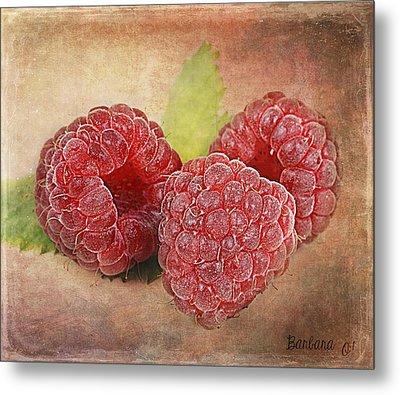 Raspberries  Metal Print by Barbara Orenya