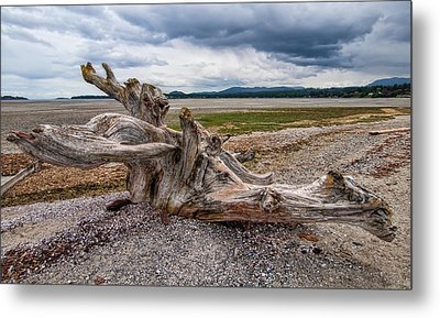 Rathtrevor Beach Stump Metal Print by James Wheeler