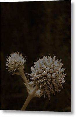 Rattles Metal Print by Tim Good