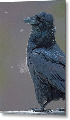Raven In Snow- Abstract Metal Print by Tim Grams
