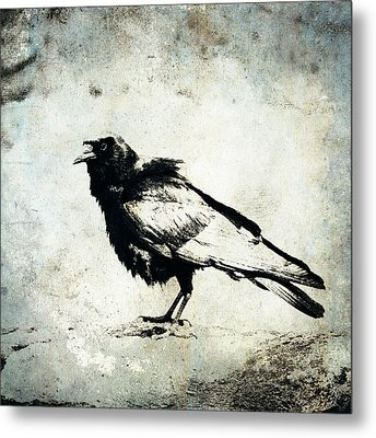 Raven On Blue Metal Print by Carol Leigh