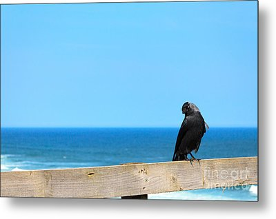 Metal Print featuring the photograph Raven Watching by Peta Thames