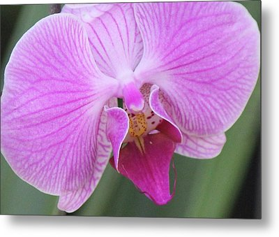 Metal Print featuring the photograph Ravenous Orchid by Bill Woodstock
