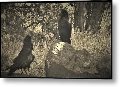 Raven's Squawk Metal Print by Donna Cook