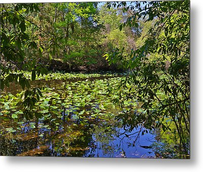 Ravine Gardens - A Different Look At Florida Metal Print by Christine Till