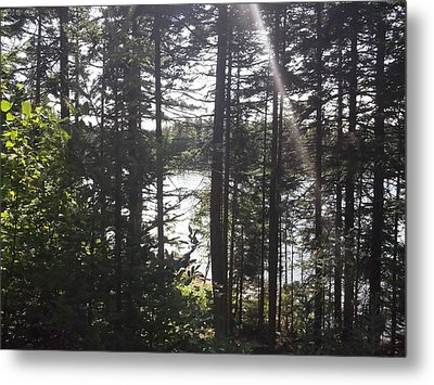 Ray O Light Metal Print by Melissa McCrann