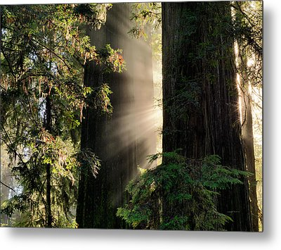 Rays Of Light Metal Print by Leland D Howard