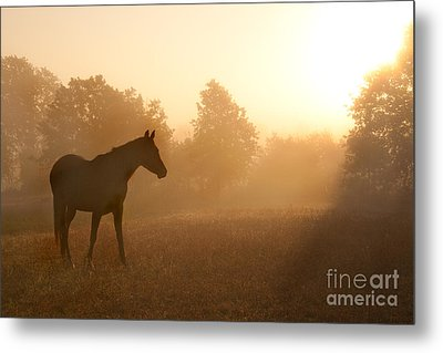 Rays Of Sunrise Metal Print