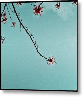 Metal Print featuring the photograph Reach And Blossom by Kevin Bergen