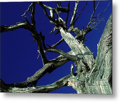Metal Print featuring the photograph Reach For The Sky by Janice Westerberg