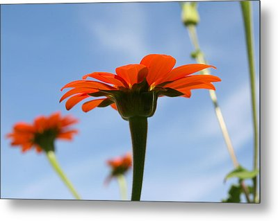 Metal Print featuring the photograph Reach For The Sky by Neal Eslinger
