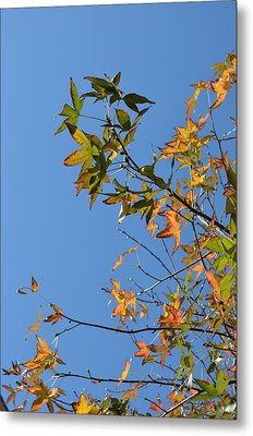 Reach Up Metal Print