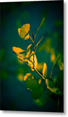 Metal Print featuring the photograph Reaching For The Light by Dave Garner