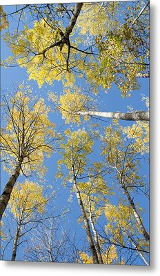 Reaching For The Sky 1 Metal Print by Rob Huntley