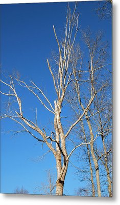 Metal Print featuring the digital art Reaching Out by Linda Segerson