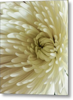 Metal Print featuring the photograph Reaching Out by Nancy Marie Ricketts