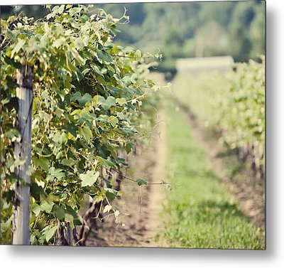 Ready For Harvest  Metal Print by Lisa Russo